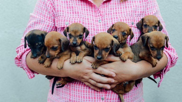 Vereador alerta sobre falta de leis sobre proteção e bem-estar animal